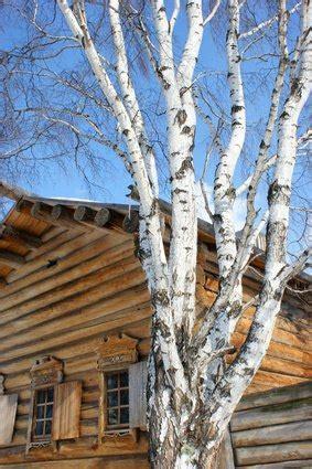 finish birch wood ehow