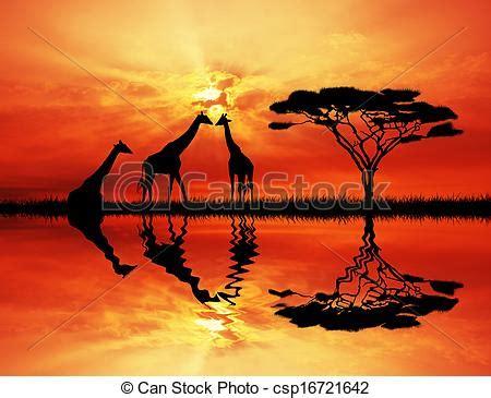 giraffe  sunset giraffe  african landscape