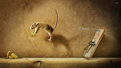 Mouse Cheese Jumping Animals Trap Buzzerg Loading