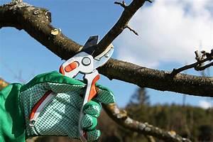 Apfelbaum Wann Schneiden : der obstgeh lzschnitt obstb ume und beerenstr ucher zweckm ig schneiden und erziehen garten ~ Frokenaadalensverden.com Haus und Dekorationen