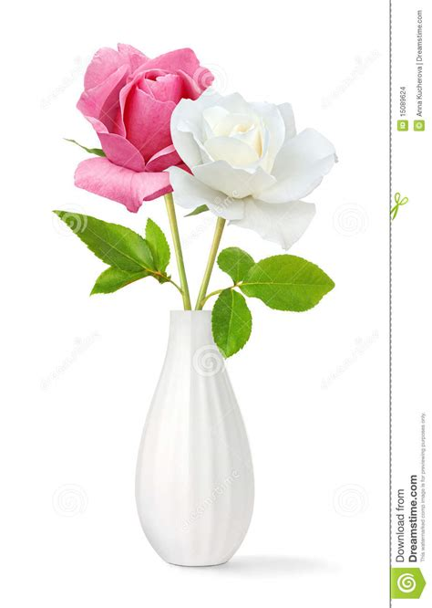 roses   vase stock images image