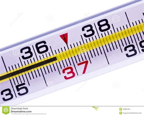 thermometer of a normal temperature stock photo image 16884104