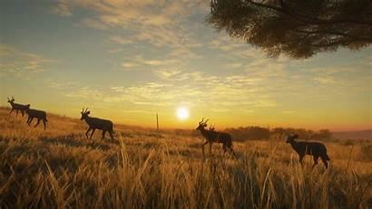 Wild Savanna Call Thehunter Vurhonga Dlc Trailer