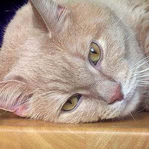 Enlever Odeur Urine Chien : comment enlever l 39 odeur d 39 urine de chat 8 tapes ~ Nature-et-papiers.com Idées de Décoration