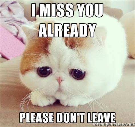 Cute Cat Meme Generator - i miss you already please don t leave sad kitten 12 meme generator kitties pinterest