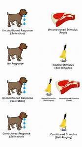 File Classical Conditioning Diagram Png