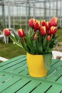 Tulpen Im Topf In Der Wohnung : 10 tolle ideen f r tulpen drinnen draussen soulsister meets friends ~ Buech-reservation.com Haus und Dekorationen