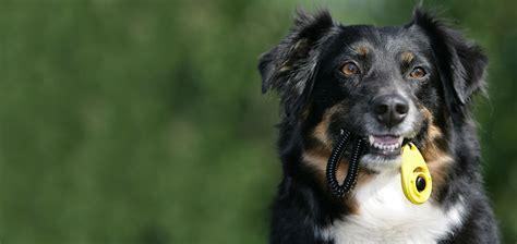 hundeschule hundetraining hunde verhaltenstherapie berlin