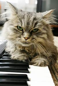 Wish I Had This Talent My Cat Plays Piano Really Does Your Cat Musical