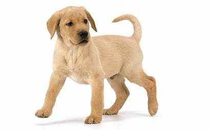 Puppy Perro Correr Success Ways Yourself Adecuado