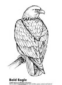 bald eagle coloring page coloring pages gallery - American Bald Eagle Coloring Page