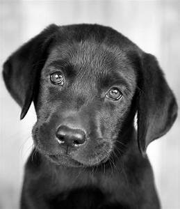 Black Dog Names - Over 200 Inspiring Ideas For Naming Your Pup