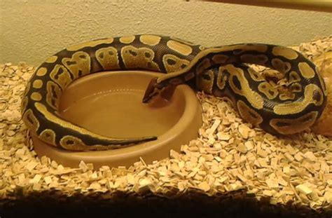 tout les jeux de cuisine l 39 élevage de serpents ma méconnue