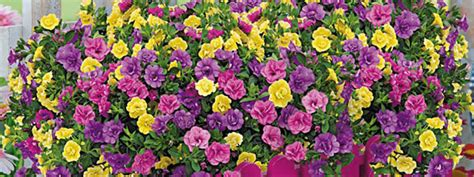 Baldur Gartenkatalog Kostenlos Bestellen Kostenlose
