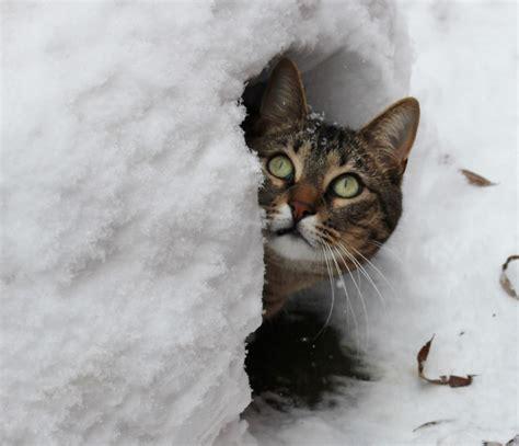 snow christa gampp flickr