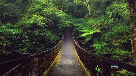 Super Best Nature Big Jungle Hd Images