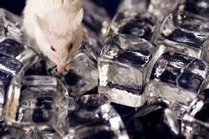 Comment Attraper Une Souris : comment attraper une souris avec un pi ge souris sans ~ Dailycaller-alerts.com Idées de Décoration