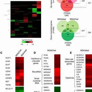 (PDF) Mutational Profiles Reveal an Aberrant TGF-β-CEA ...