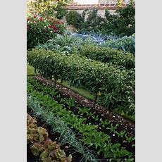 Formal Walled Vegetable Garden With Cabbage, Cardoon And