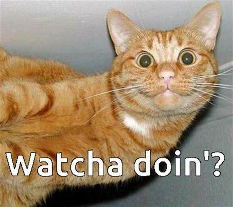 Meme Kitty - bored cat memes image memes at relatably com