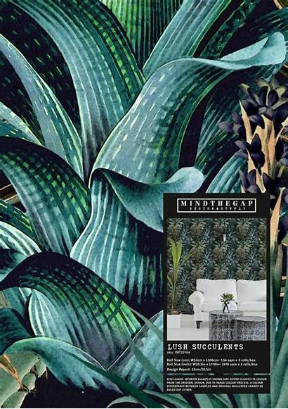 Succulents Samples Sample Lush