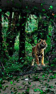 Pin by Ksanurath on Tiger Triumph | Wild animal wallpaper ...