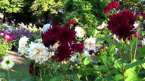Dahlienfeuer Im Britzer Garten by Dahlienfeuer Im Britzer Garten