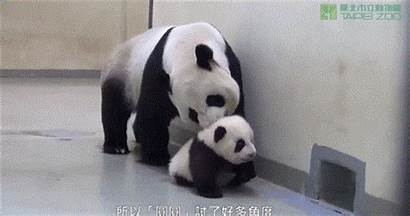 Panda Bed Explosion Chilly Feel Warm Feeling