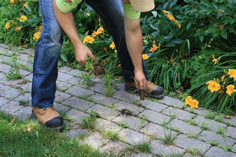 rocks for driveway how to remove weeds from your paving stones and install