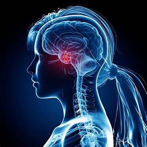 Pituitary Gland  Anatomy  Function  And Treatment