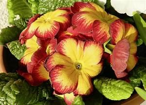 Aktuelle Blumen Im April : blumen archive bzforum ~ Markanthonyermac.com Haus und Dekorationen