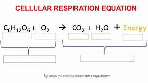 Cellular Respiration Worksheet Answer Key Pogil
