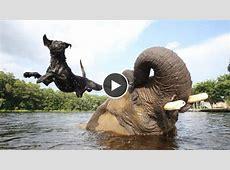 Dieser Hund und dieser Elefant sind einfach unzertrennlich