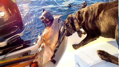 grouper florida season