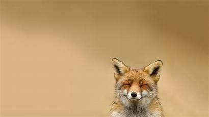 Fox Background Animal