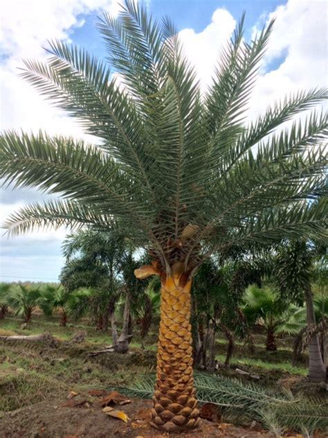 high hope nursery plantantcom