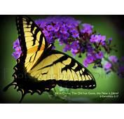 2 Corinthians 517  Inspiration Purple Butterfly