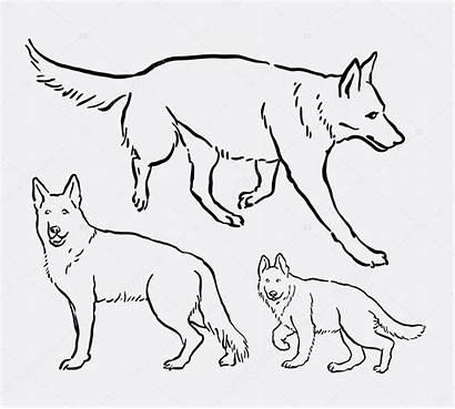 Shepherd German Dog Drawing Line Pet Animal