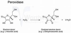 Enzyme Manual  Peroxidase