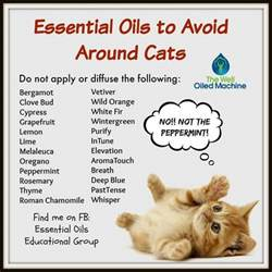 cats essential oils essential oils and cats on