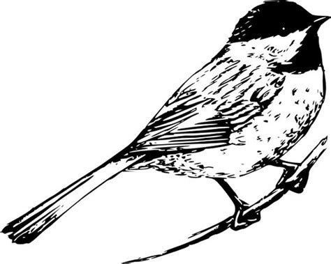 sparrow clipart black and white sparrow bird clipart clipground