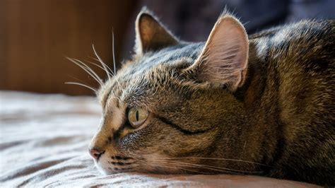 The Best Cat Food For Sensitive Stomach And Vomiting
