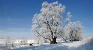 Sprüche Winter Schnee : spr che weisheiten neues jahr zitate aus dem leben ~ Watch28wear.com Haus und Dekorationen