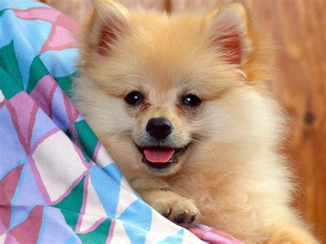 Baby Dog Pictures Dogs Wallpaper