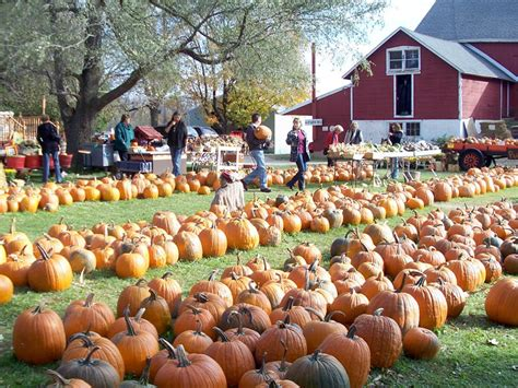 Best Pumpkin Farm Milwaukee Area by Onmilwaukee Com Kids Amp Family Jim S Pumpkin Farm Offers
