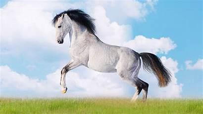 Horse Wallpapers Desktop Animals Super Natural Background