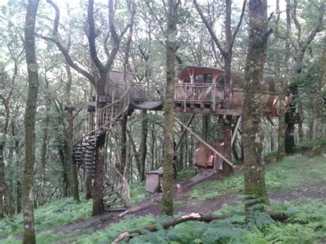 Living-room Treehouses-updated Cottage Reviews
