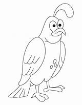 Quail Coloring Pages California Drawing Common Preschool Popular Getdrawings Coloringhome sketch template