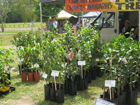 plants gardening where to buy plants and pots on the sunshine coast sunshine coast