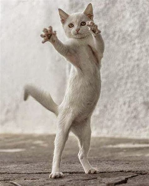 time funny pictures  dancing animals